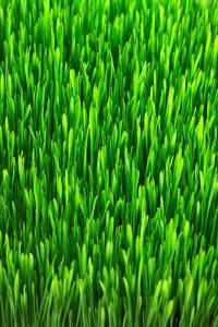Lawn Dethatching in Racine