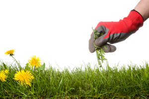 Lawn Weed Control in Racine