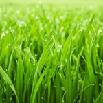 Racine Lawn Fertilization