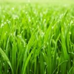 Racine Lawn Fertilization