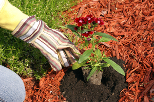 Racine Mulching Services & Flower Bed Maintenance