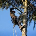 Racine Bush and Tree Trimming