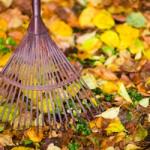 Seasonal Yard Clean Ups in Racine