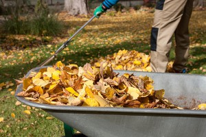 Kenosha Seasonal Yard Cleanup