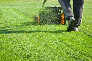 Racine Lawn Maintenance