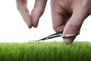 Racine Landscaping Experts